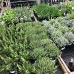 Doubling the Herb Garden