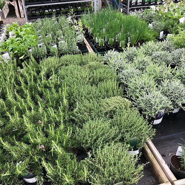 Herb plants on display in the arboretum garden centre